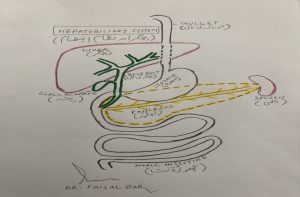 The liver and bile duct system