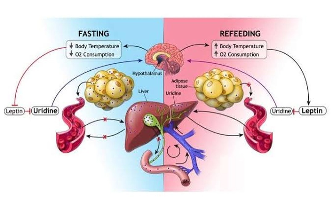 Ramadan Fasting & Liver Transplant Recepients and Donors